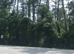 Lot 2 WATERS BLUFF SD Darien, GA 31305